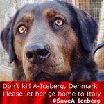 Hundens Tarv arbejder aktivt for at få ændret hundeloven