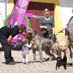 Hundedage på Valdemar Slot