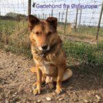 Hundens Tarvs holdning til import hunde!
